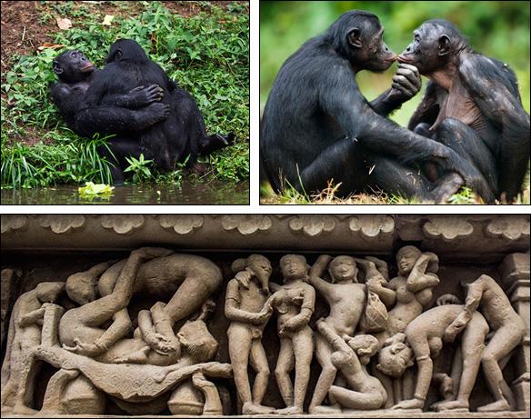 Bonobos & älskogsskulpturer i Khajuraho